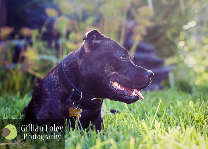 Gillian Foley Photography | Pet Photography
