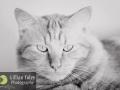 Gillian Foley Photography | Pet Photography